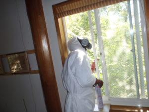 4個のスズメバチの巣を窓から見上げる栃岡