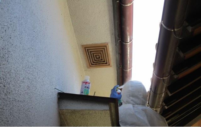 1階通気口内のスズメバチ駆除