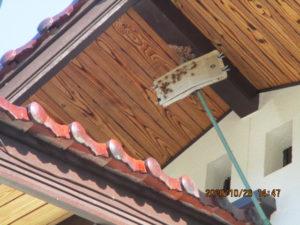 スズメバチの巣の撤去後戻りバチを粘着マットにて捕獲中です。