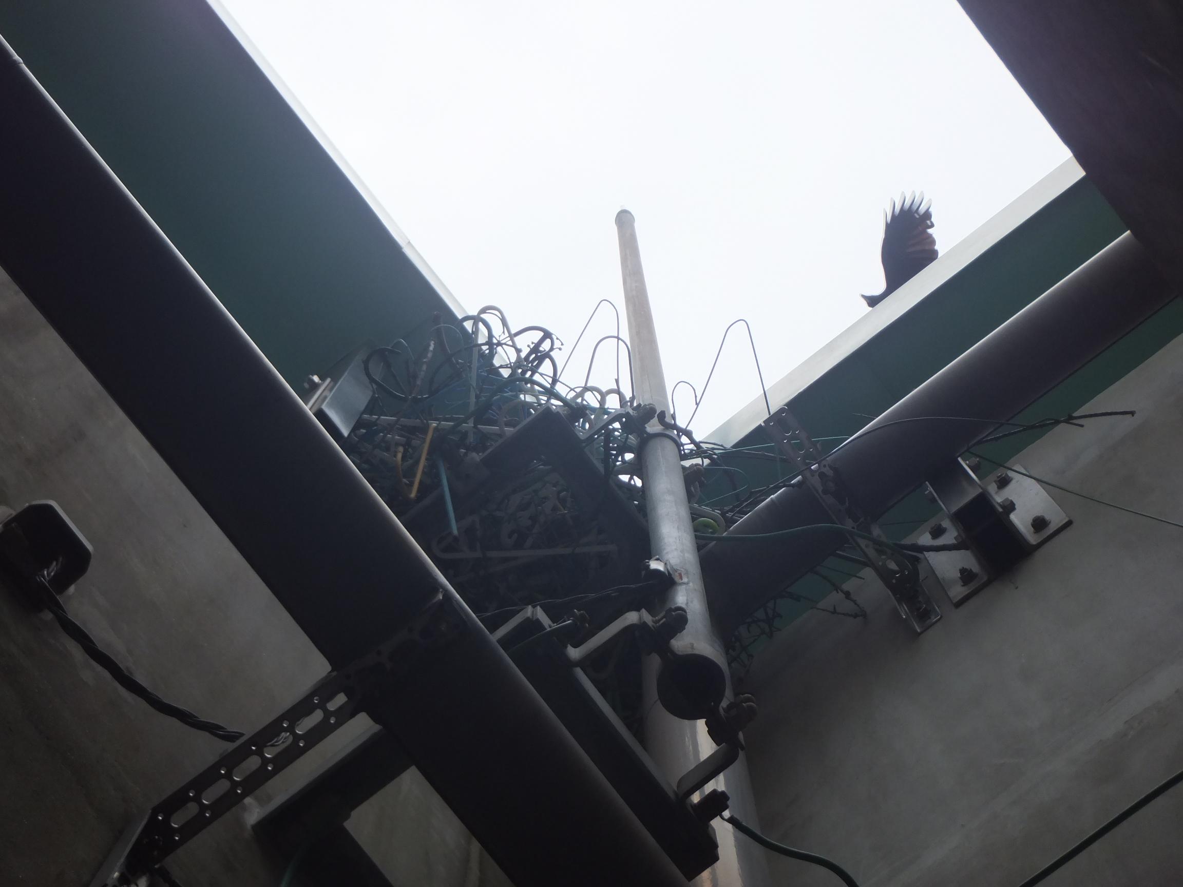 貯水槽架台に営巣したカラスの巣